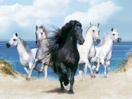 Black horse with four white horses near the sea desktop wallpaper 1176