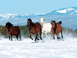 horse running wallpaper horse running wallpaper many horses running 193