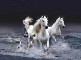 horse wallpaper dark horse wallpaper fantasy horse wallpaper horse 362