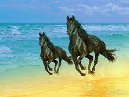 horse wallpaper dark horse wallpaper fantasy horse wallpaper horse 638