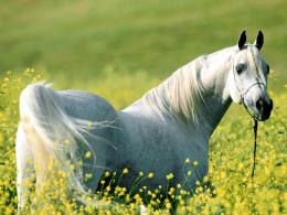 Horse Wallpapers Wild Horses PhotosHD Animal Wallpapers 882
