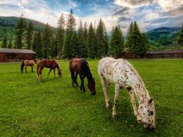 Horses Wallpapers » Blog Archive » Four Horses Grazing Country 1980