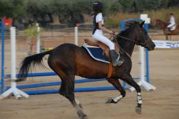 Learn to Horse Ride and Jump in Murcia, CorveraNativeSpain 1071