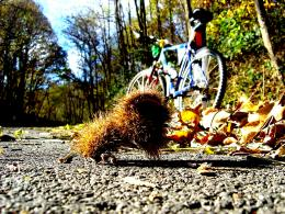 Going Around Autumn Mtb Italy Treviso Fall hd wallpaper #684287 595