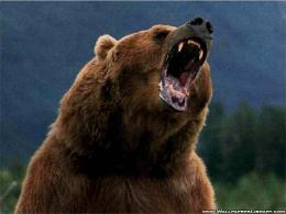 Grizzly Bear 1042
