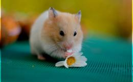 August 31, 2015 By Stephen Comments Off on Cute Hamsters Wallpapers HD 705