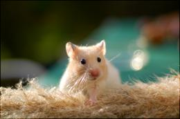 Hamster Running Bike Wallpaper Background #3798 Wallpaper 1692