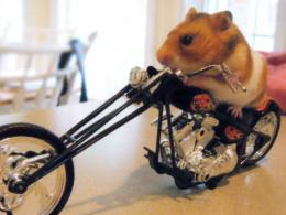 Hamster Ride A Bike Wallpapers,Other Pets Wallpapers & Pictures Free 309