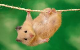 Hamster Running Bike Wallpaper Background #3798 Wallpaper 870