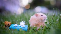 on August 5, 2015 By admin Comments Off on Funny Hamster Wallpapers 523