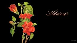 Hibiscus wallpaperForWallpaper com 1284