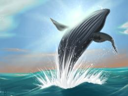 Humpback Whale jumping out of water by Scorch Art on DeviantArt 703