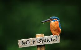 Related wallpapers from Kingfisher Fishing 840