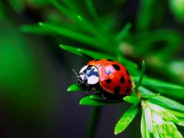 File Name : Ladybug leaf animal jpg Resolution : 230 x 170 pixel Image 782
