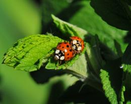 Pin Ladybug On Leaf Free Desktop Wallpapers Download on Pinterest 1318