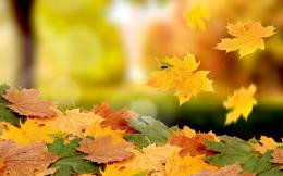 File Name : falling leaves autumn jpg Resolution : 2880x2880 Image 701