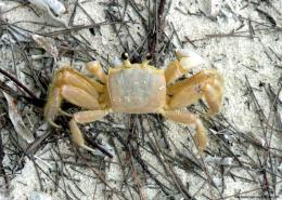 Small Crabs | Wallpapers Gallery 564