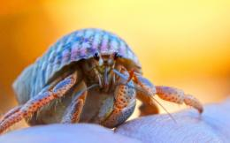 Hermit Crab by Sunira on DeviantArt 1382