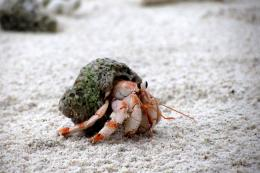 Hermit Crabs HD Wallpaper | Animals Wallpapers 512