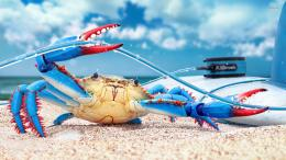 Blue crab wallpaper1375760 438