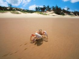 Animal desktop background cute little crab beach wallpaper 1211