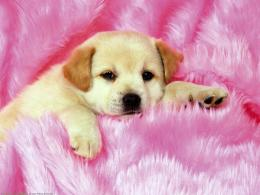 The Free Little cute Dog\'s Puppies desktop wallpaper pictures for PC 1340