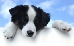Top 10 Dogs Wallpapers   HD Animals Wallpapers 879