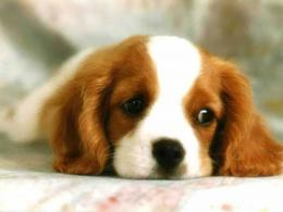 Puppy Dogs Baby Puppies Wallpaper Little Puppy Dog Wallpapers 955
