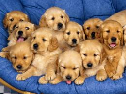 Little Puppies Dog Wallpaper Picture Wallpaper with 1600x1200 689
