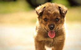 Little puppy wallpapers and imageswallpapers, pictures, photos 500