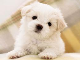 How to Care for Small Dog Breeds | Dog Magazine 576