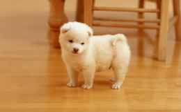 download cute little puppy wallpaper tags puppy little funny cute 1456