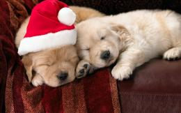 Little Christmas Puppies wallpaper WallpapersHD Wallpapers 88581 1932