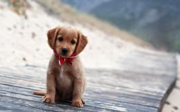Little Cute Puppy Wallpapers Pictures Photos Images 1650