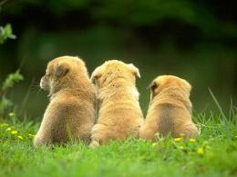 Three Little PuppiesPuppies Wallpaper13814765Fanpop 1920