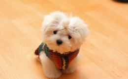 Cute Animals   Free Desktop Wallpapers for HD, Widescreen and Mobile 981