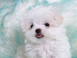 Cute Puppies HD Wallpapers | HD Wallpapers 360 463