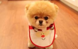 Cute Dog Christmas Wallpapers | HD Wallpapers 973