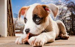 Little Puppy HD wallpaper 1993