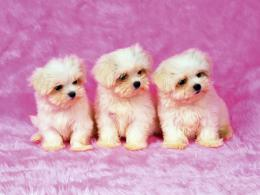 Cute Puppies Pictures & Wallpaper of Dog Breeds 543
