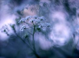 Wallpaper grass, macro, bokeh, flowers wallpapers macrodownload 1164