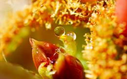 Macro Leaves Drops Water HD Wallpaper 183