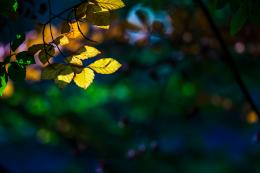 , macro, autumn, beauty, leaves, green bokeh, photo, hd wallpaper 1196