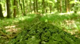 HD WallpapersGreen, Forest, Tree Bark, Macro, Bokeh, Wallpapers 558
