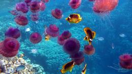 Pink Jellyfish Yellow Fish Hd Wallpaper | Wallpaper List 946