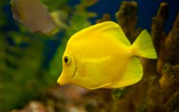 Yellow Tang Fish 1920x12001529470 381