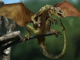 Download Small Dragon wallpaper in Animals wallpapers with all 693