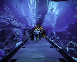 Dubai Aquarium Hd Wallpaper | Wallpaper List 478