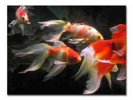 Aquarium Fish Wallpaper In High Resolution For Fre 1303