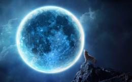 Howling wolf full moon Wallpapers Pictures Photos Images 1132